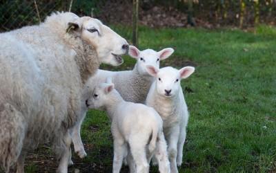 Kinderboerderij & zwangerschap